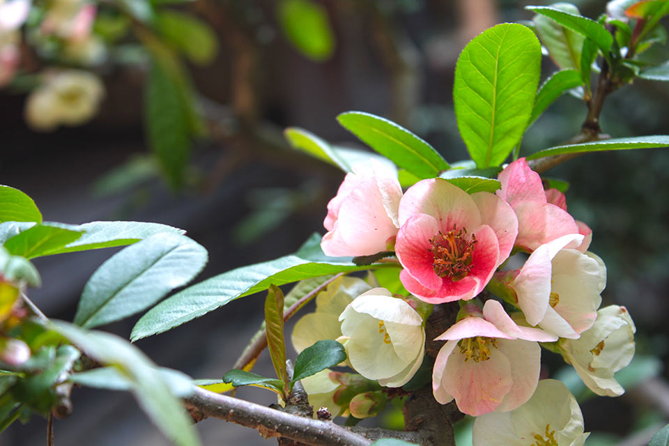 正受院の庭の花