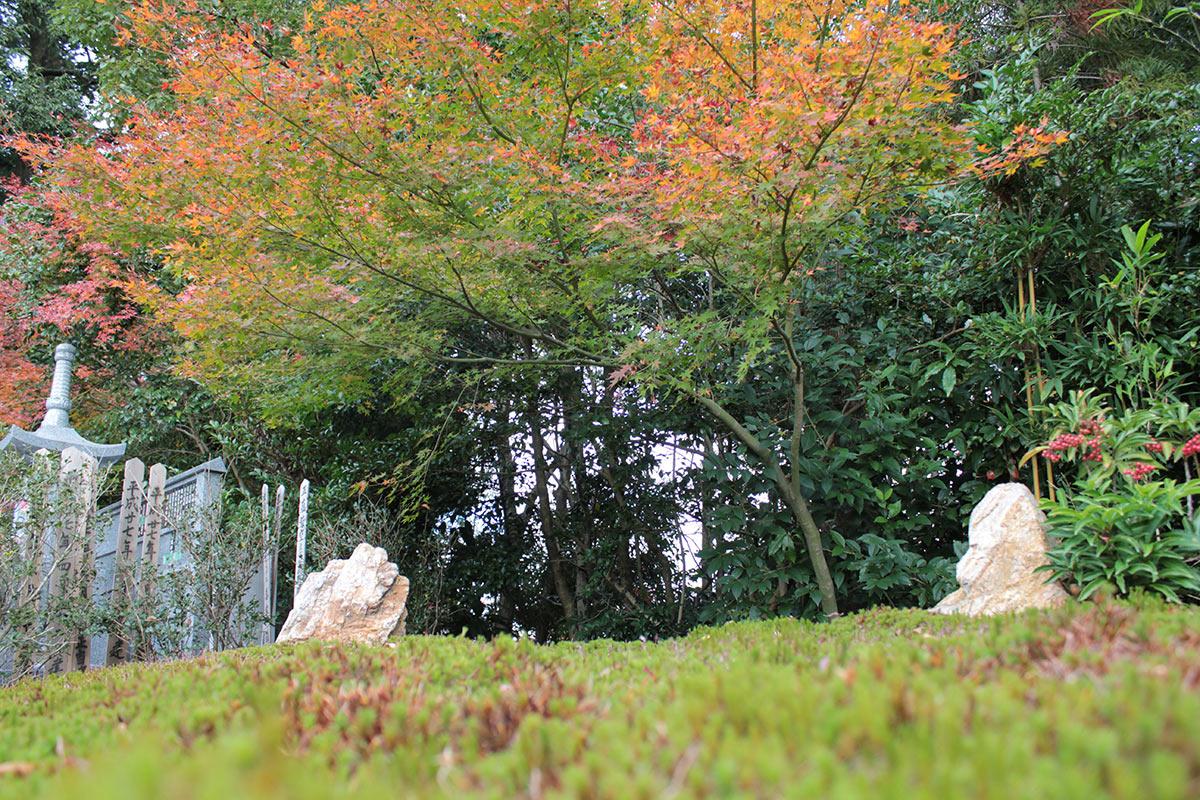 大徳寺の正受院の樹木葬地のアップ
