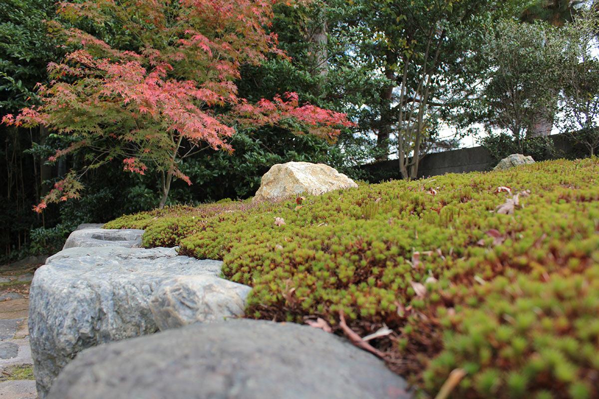 大徳寺の正受院の樹木葬の杉苔