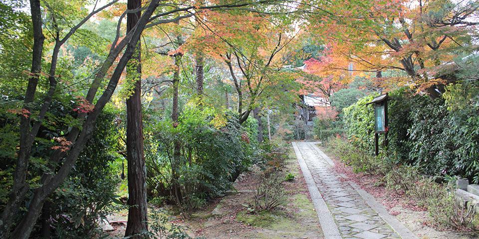 大徳寺の正受院の山道