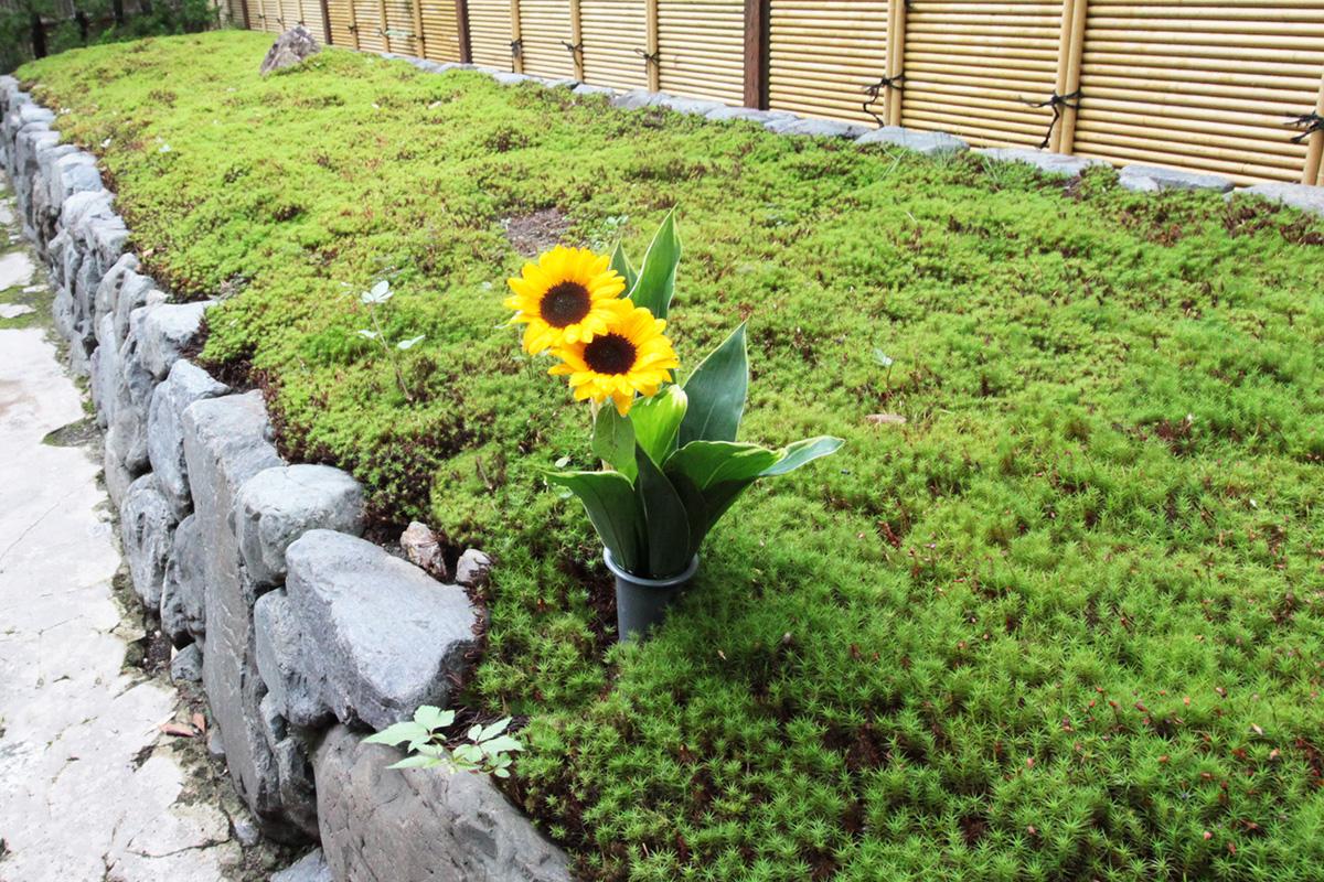 荘厳院の黄色いお花の献花