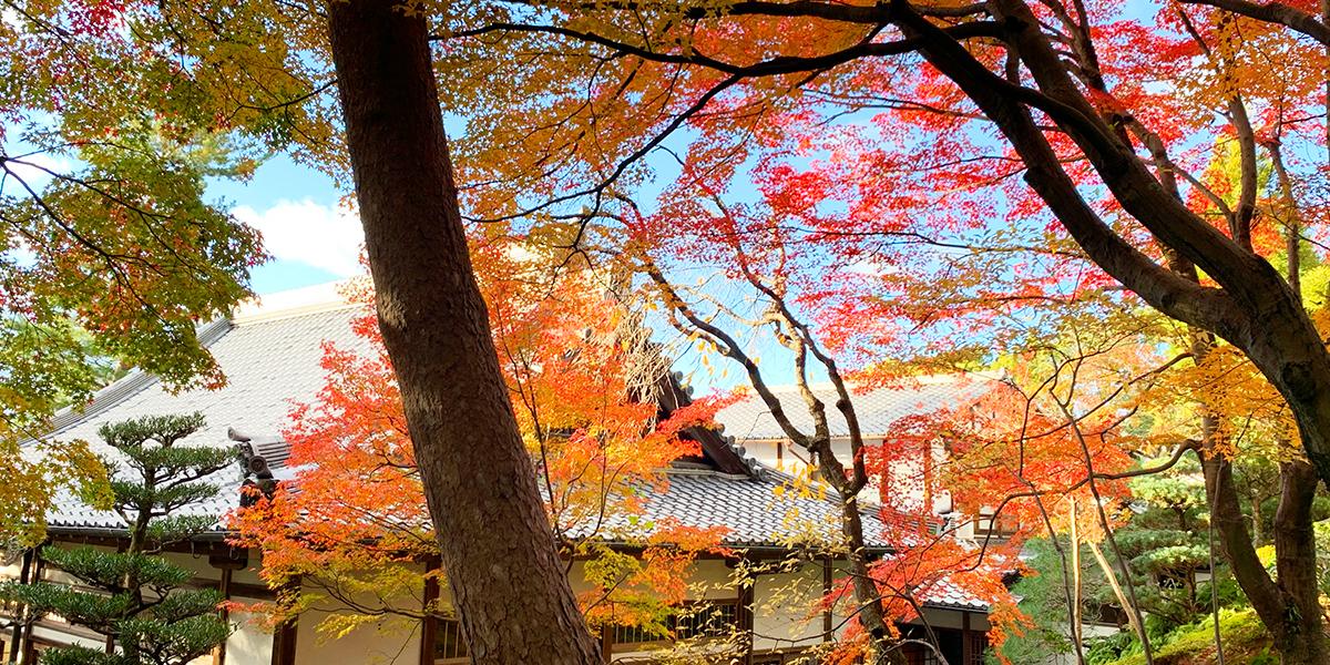 東福寺正覚庵の紅葉