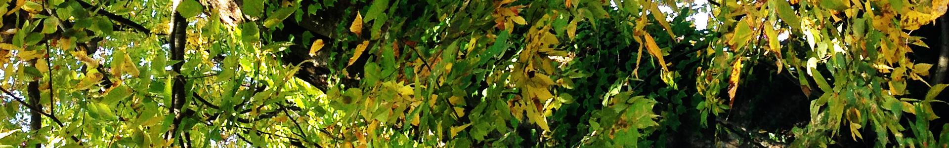 両足院の紅葉