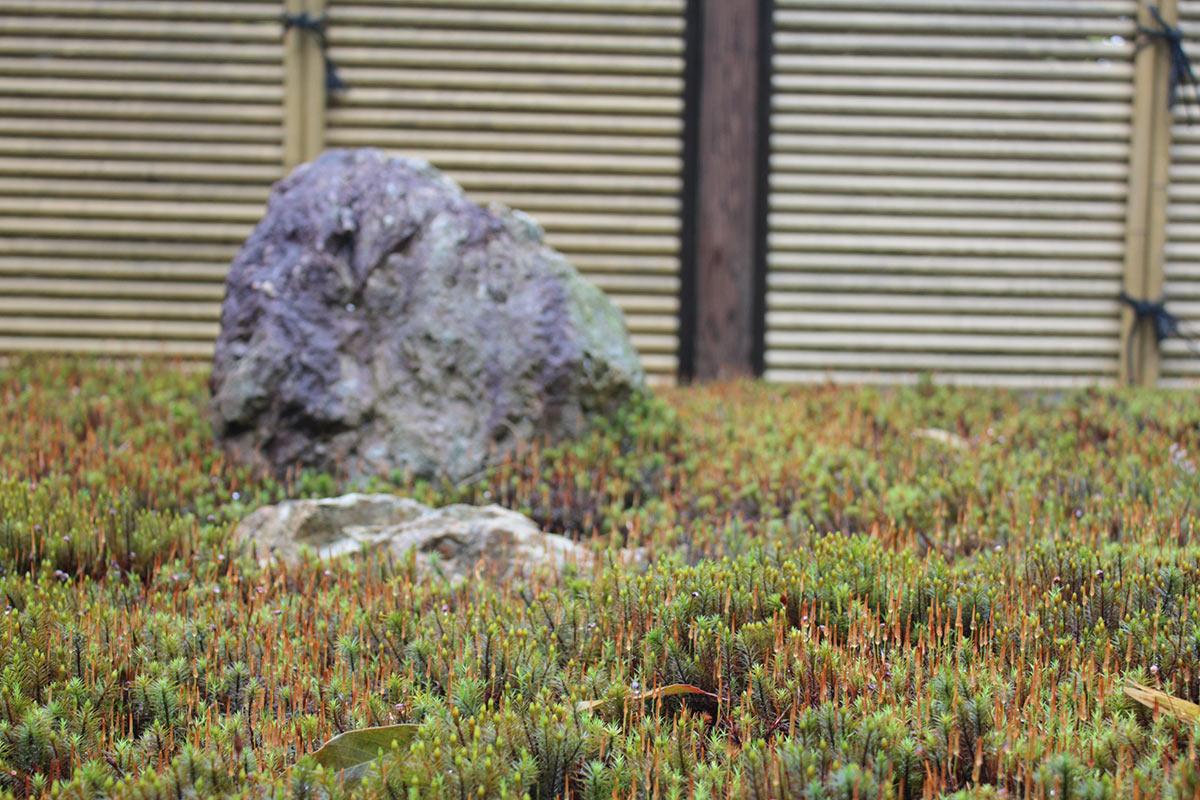 東福寺荘厳院の樹木葬地の杉苔