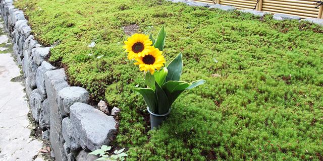 荘厳院の献花