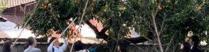 東福寺荘厳院の樹木葬法要祭の風景