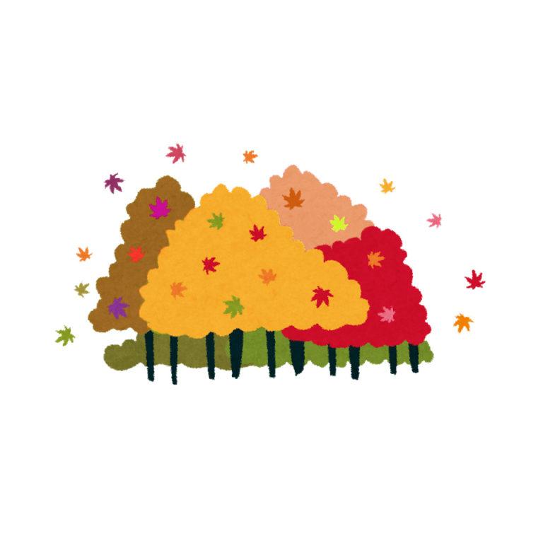樹木葬地の紅葉