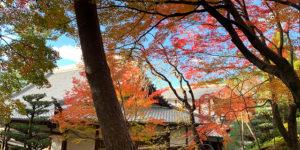 正覚庵の紅葉風景
