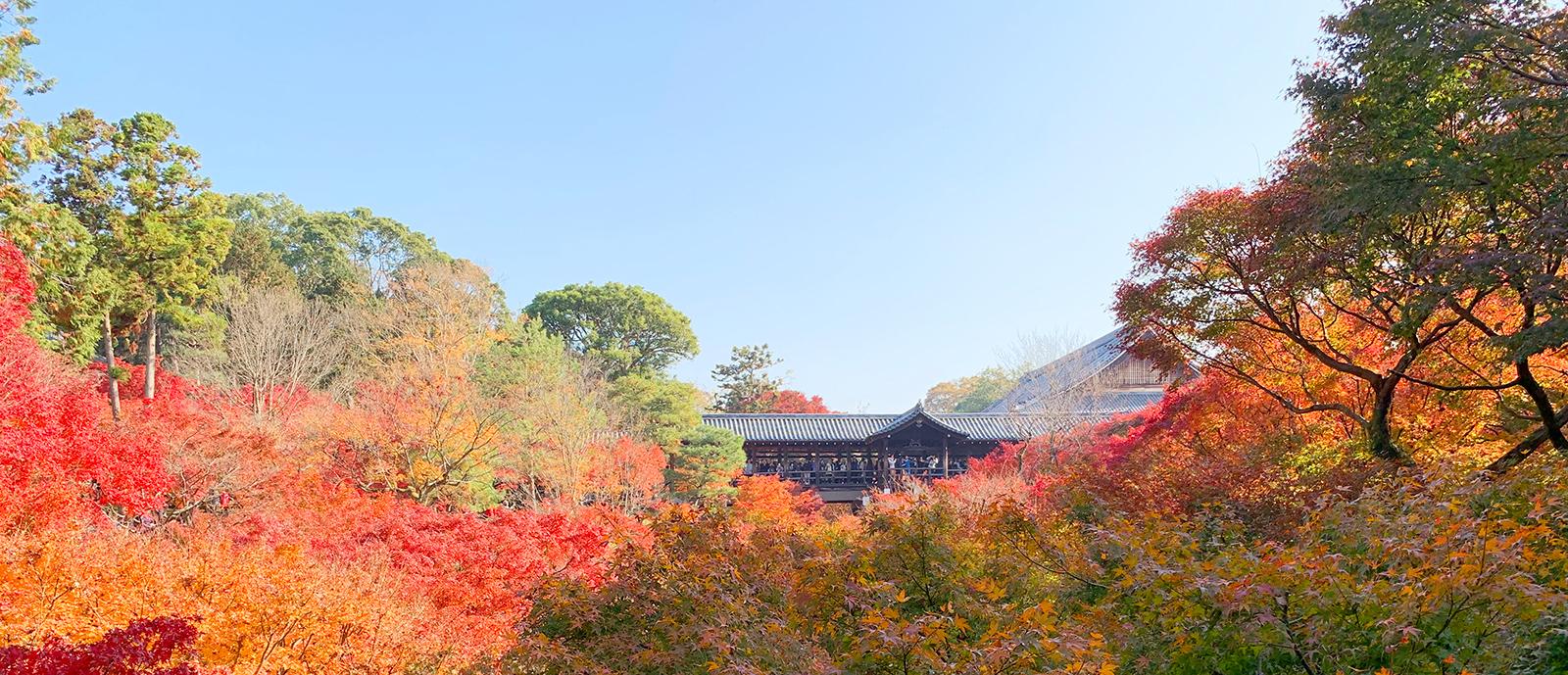 東福寺の臥雲橋からの眺め紅葉バージョン