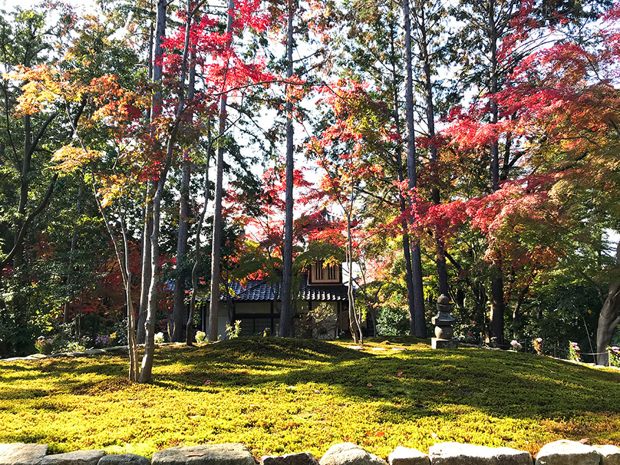 東福寺の2020年11月21日の紅葉