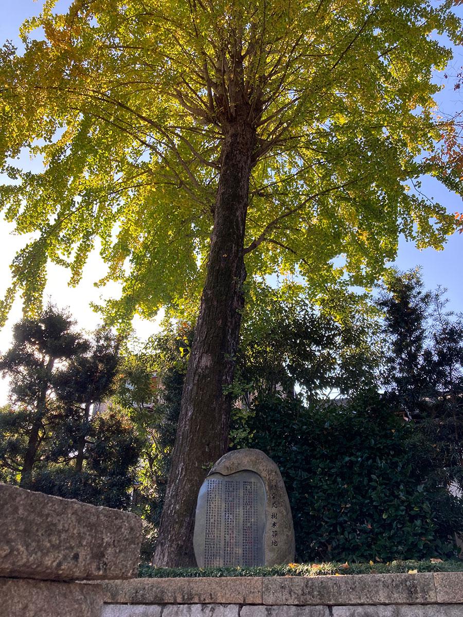 樹木葬の見学案内の一風景