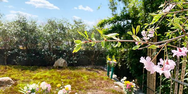 正受院樹木葬のお花