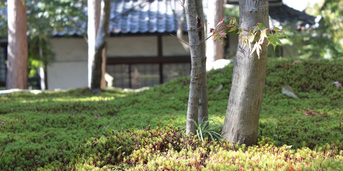 正覚庵の墓苑風景