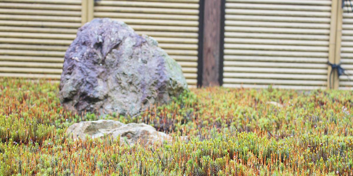 荘厳院の墓苑風景