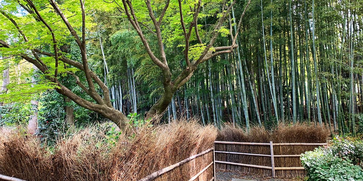 荘厳院樹木葬の風景